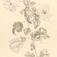 folio321plp37.jpg