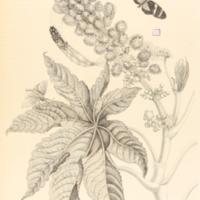 folio321plp30.jpg