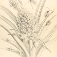 folio321plp1.jpg