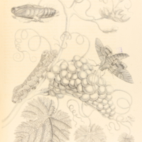 folio321plp34.jpg