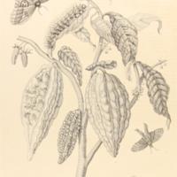 folio321plp63.jpg
